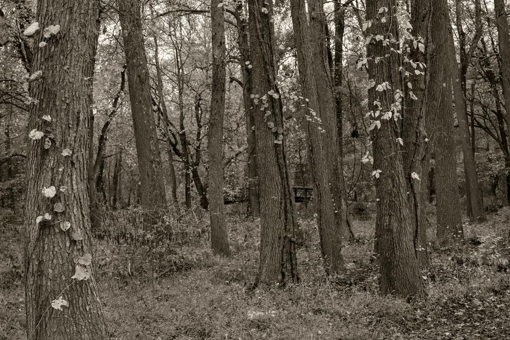 Climbing Leaves Photography Art | Alina Marin-Bliach Photography/alinabstudios LLC