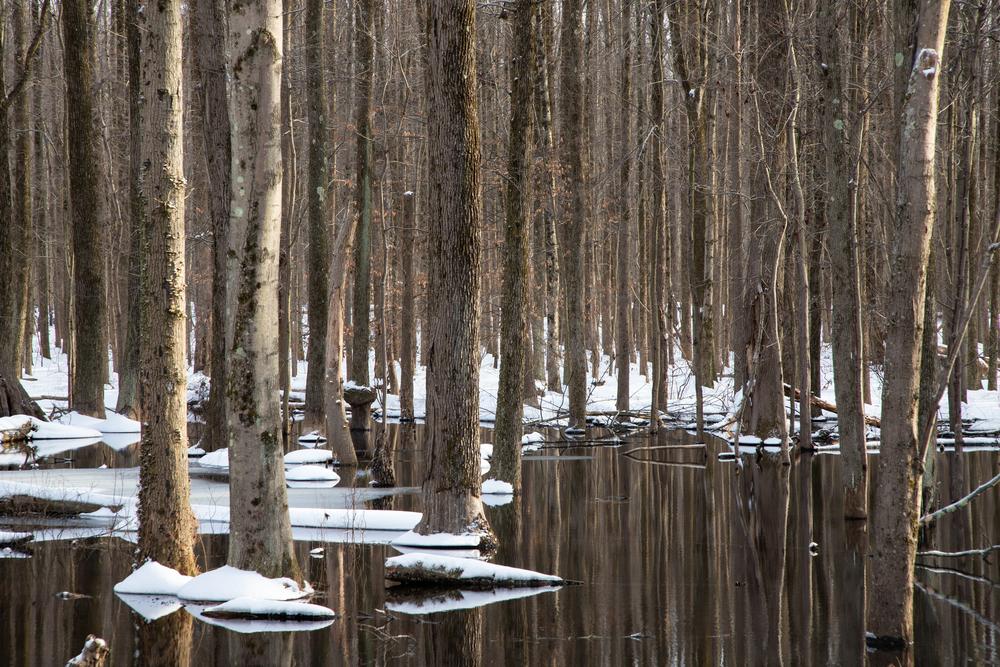 Wintering Trees Photography Art   Alina Marin-Bliach Photography/alinabstudios LLC