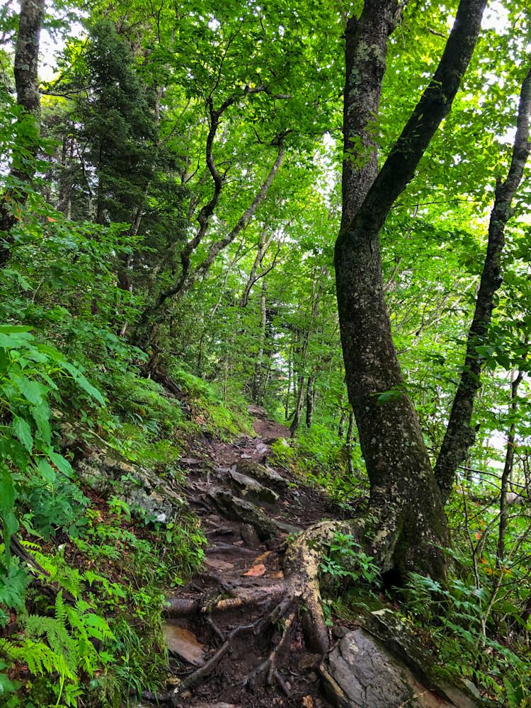 Forest Trail 2020 Photography Art   Blue Ridge Zen