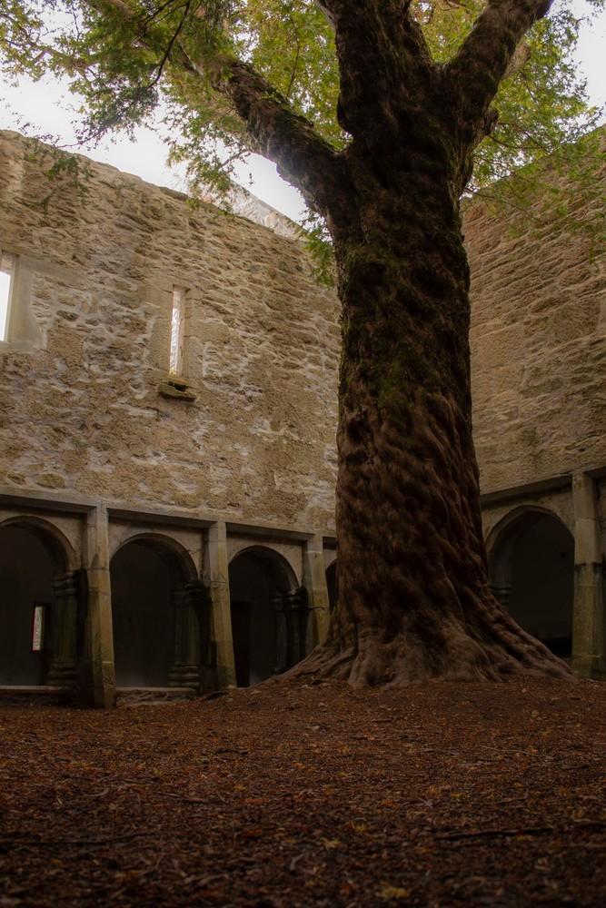 Ancient Yew, Ireland Photography Art | E. Morton Studios