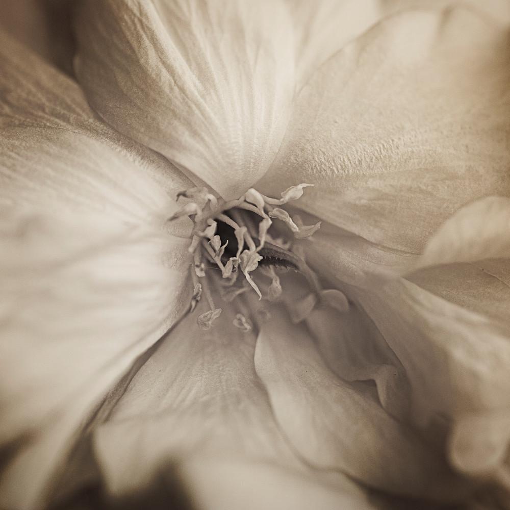 Velvet Texture Photography Art | Sandy Adams Outdoorvizions Photography