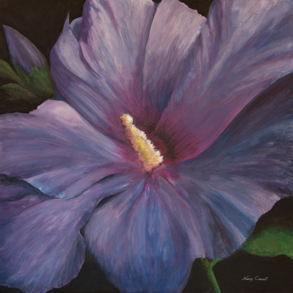 Rose of Sharon by Nancy Conant