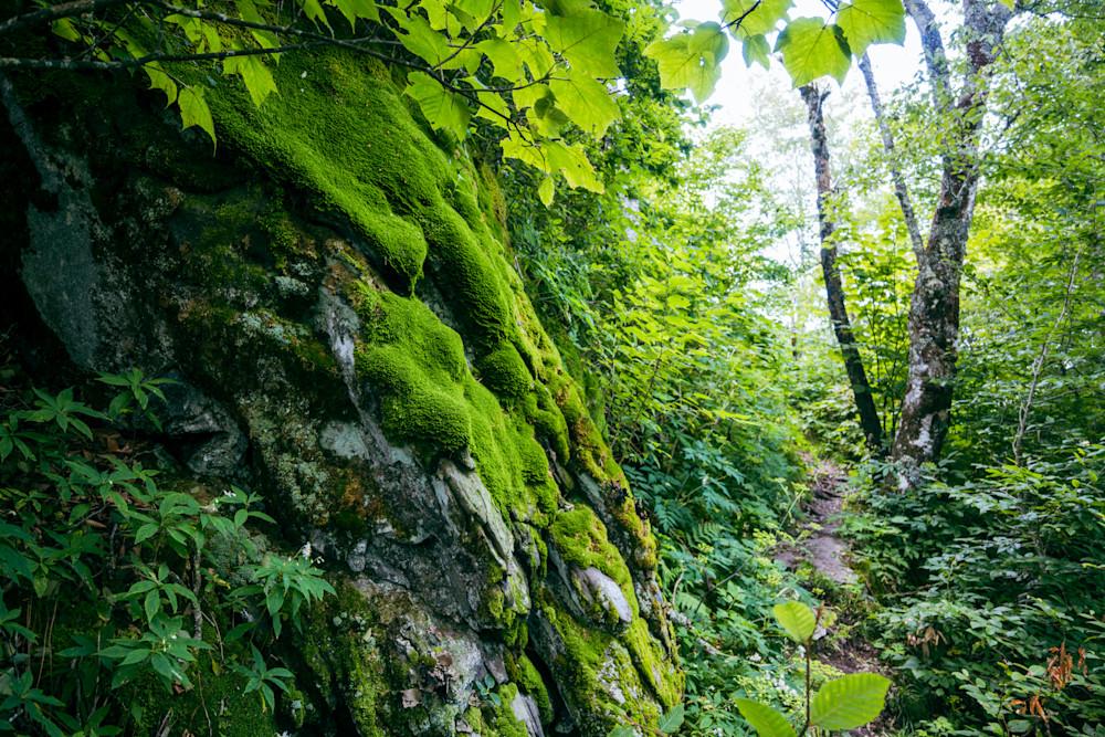 Mossy Rock Wall beside trail
