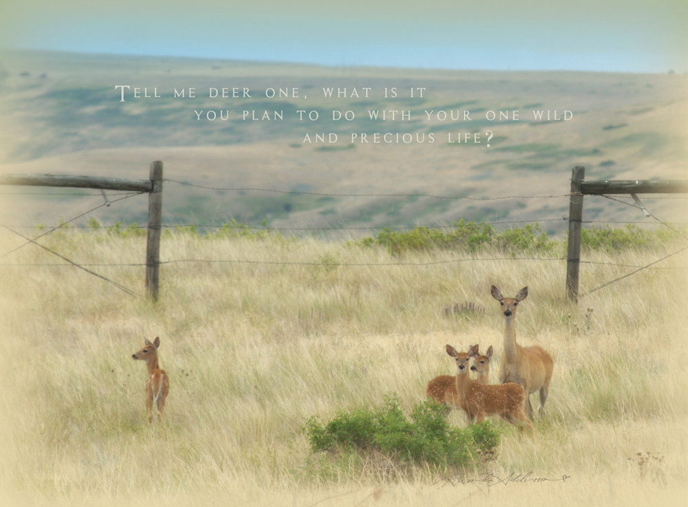 Mother Deer and her Fawns Art