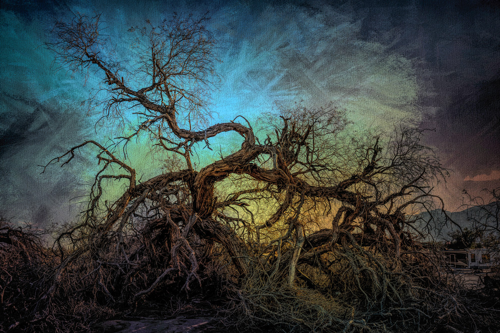 Dancing Tree Of Death Valley Photography Art | Kendall Photography & Fine Art