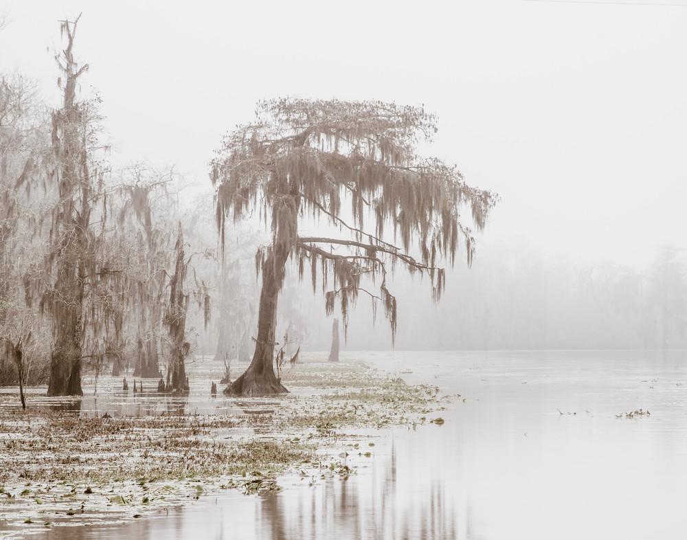 Blind River fog - Louisiana swamp fine-art photography prints