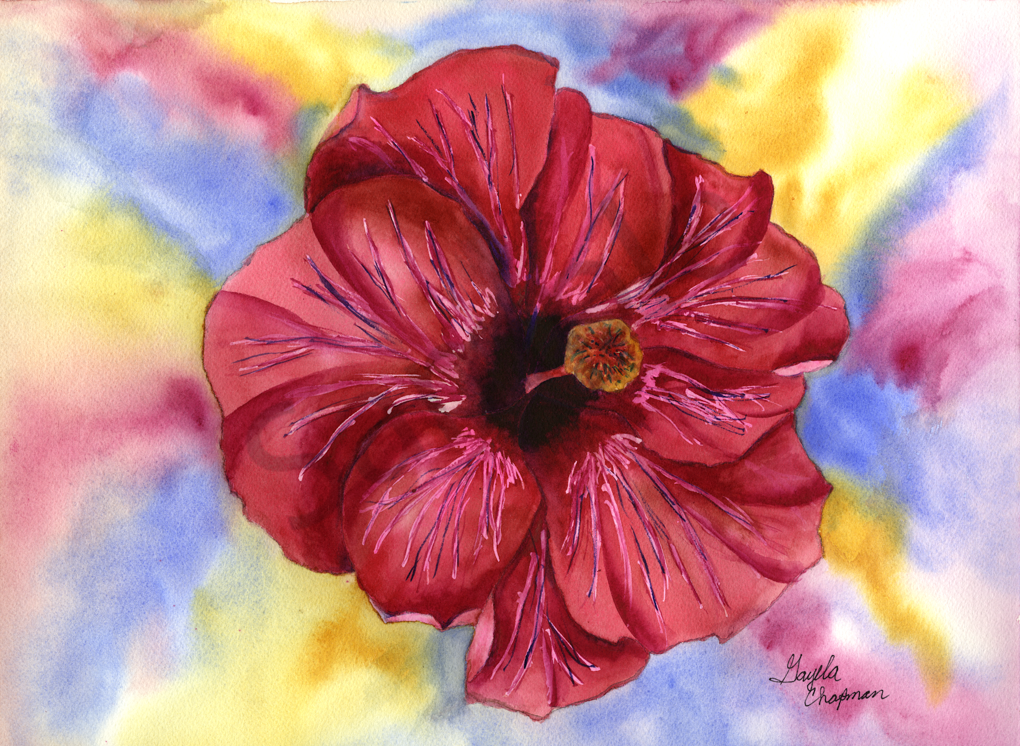 Red Hibiscus Flower Art By Gayelas Premiere Watercolormain Store