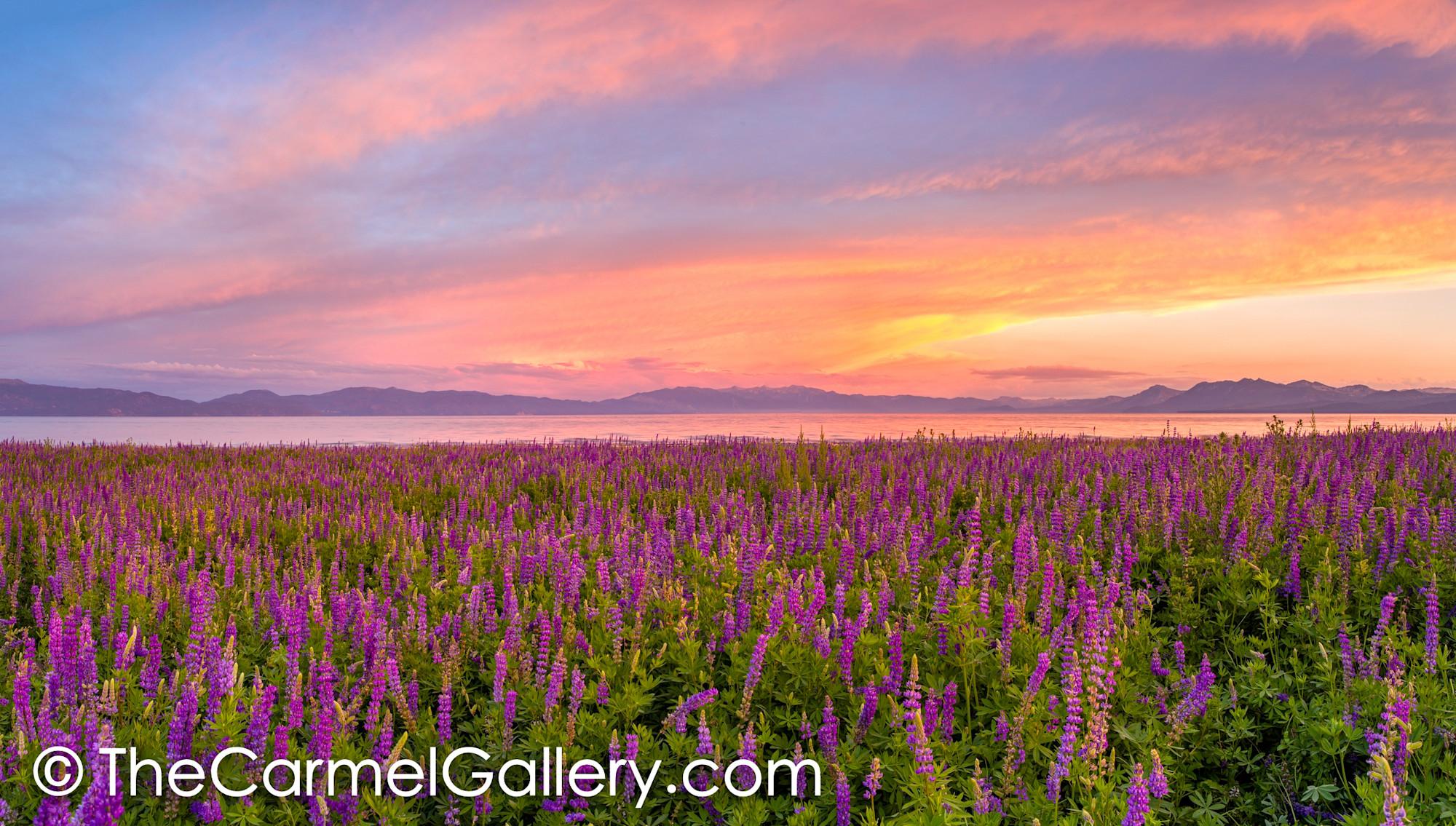 Summer sunset lake tahoe for Summer lake