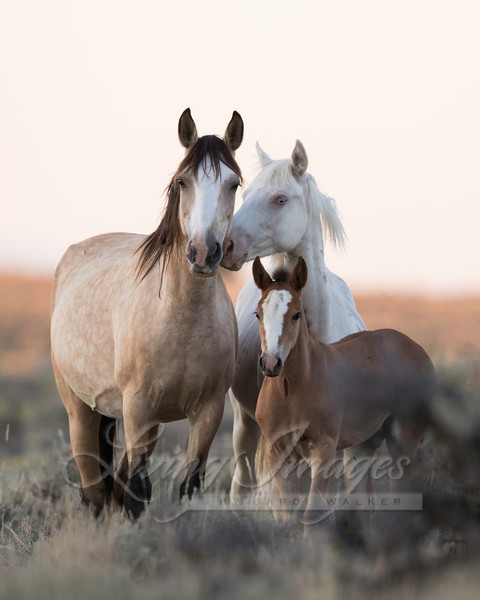 Wild Horse Family Photography Art | Living Images by Carol Walker, LLC