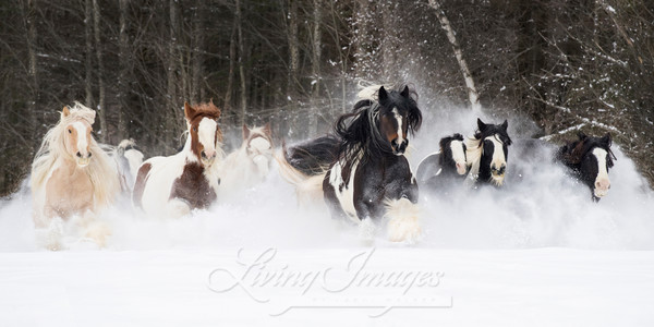 Snowy Gypsies Run Art | Living Images by Carol Walker, LLC