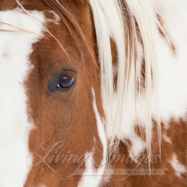 Chief's Eye Art | Living Images by Carol Walker, LLC