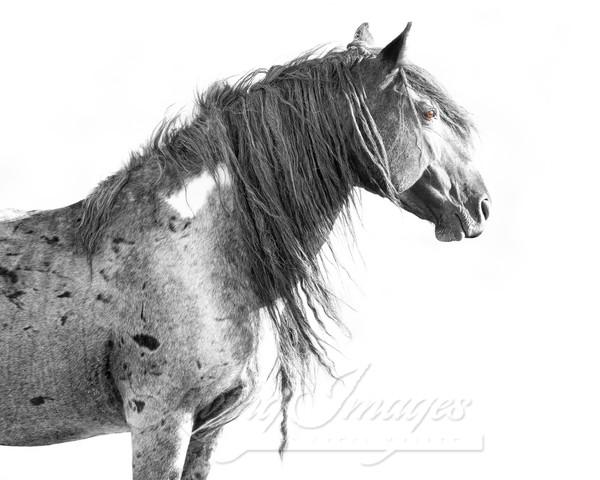 Wild Red Desert Stallion Art | Living Images by Carol Walker, LLC