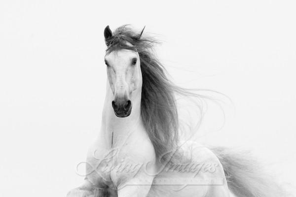 Stallion's Glory Art | Living Images by Carol Walker, LLC
