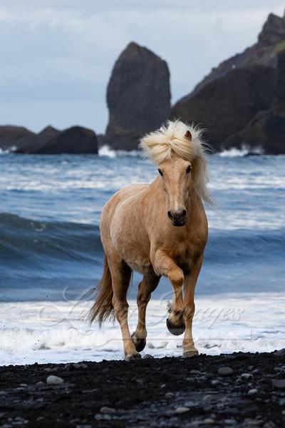 Palomino Runs Up The Beach Art | Living Images by Carol Walker, LLC