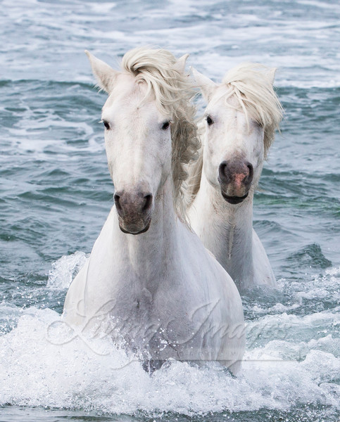 Sea Horse Twins Photography Art | Living Images by Carol Walker, LLC