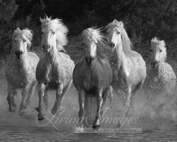 Water Run Photography Art | Living Images by Carol Walker, LLC