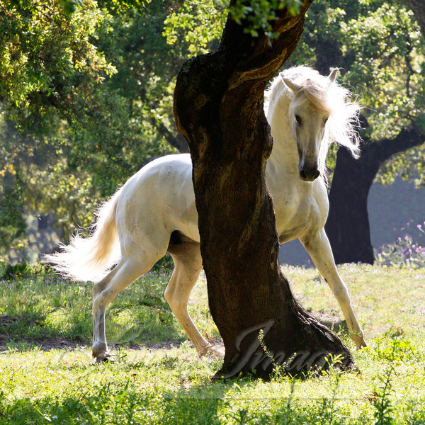 The Stallion And The Tree Art | Living Images by Carol Walker, LLC