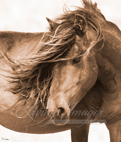 Sable Island Close Up Ii Art | Living Images by Carol Walker, LLC