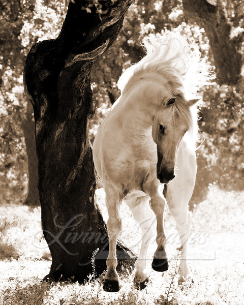 Stallion Dances Ii Art | Living Images by Carol Walker, LLC