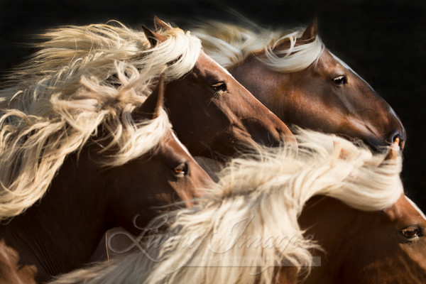 Big Mares Run Ii Art | Living Images by Carol Walker, LLC