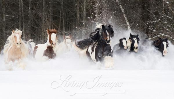 Snowy Gypsies Run Ii Art | Living Images by Carol Walker, LLC