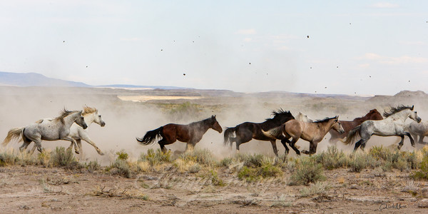 Stallions Released Art   Living Images by Carol Walker, LLC