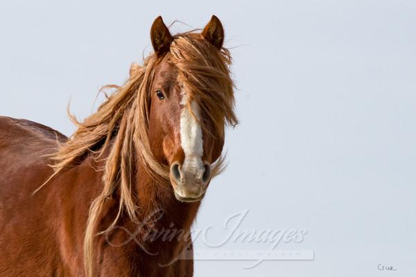 Sunrise Stallion Iii Art | Living Images by Carol Walker, LLC