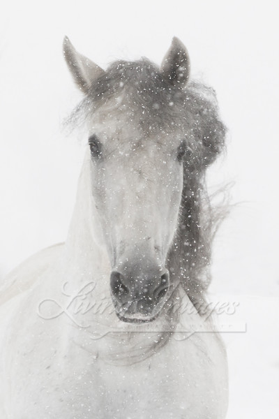 Snowy Mare Art | Living Images by Carol Walker, LLC