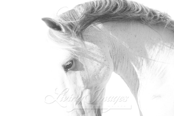 The Curve Of The Lusitano Art | Living Images by Carol Walker, LLC