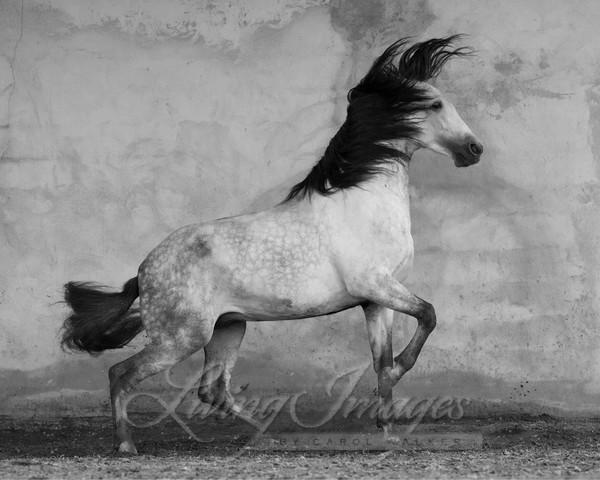 Windstorm Art | Living Images by Carol Walker, LLC