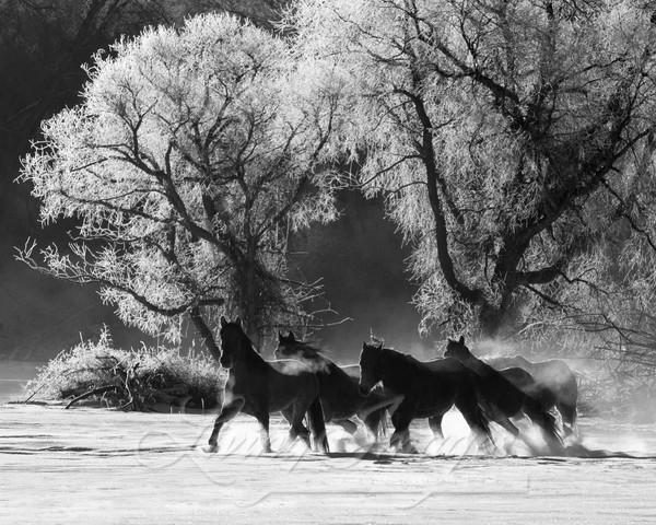 Snowy Silhouette Art   Living Images by Carol Walker, LLC