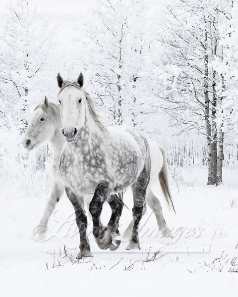 Two Percheron Mares In The Snow Art | Living Images by Carol Walker, LLC
