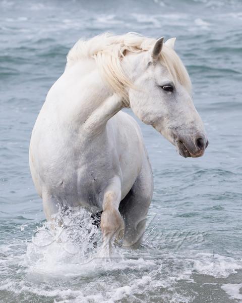 Sea Horse Turns Art | Living Images by Carol Walker, LLC
