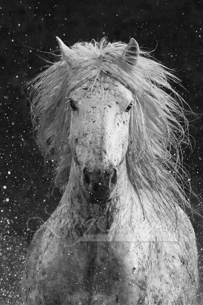 Splash Art | Living Images by Carol Walker, LLC