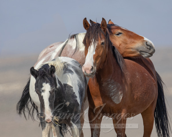 Wild Mares And Foal Touch Art   Living Images by Carol Walker, LLC
