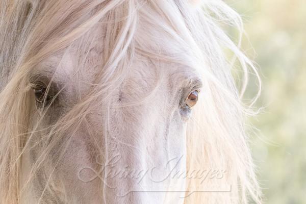 White Stallion's Eyes Art | Living Images by Carol Walker, LLC