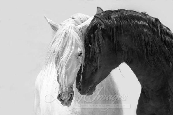 Black And White Friends Ii Art | Living Images by Carol Walker, LLC