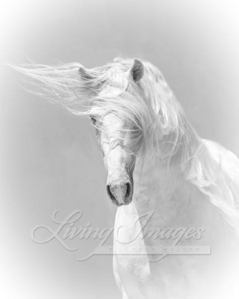 The White Stallion Art | Living Images by Carol Walker, LLC