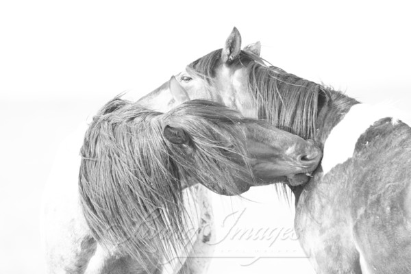 Two Wild Brothers Groom  Art | Living Images by Carol Walker, LLC