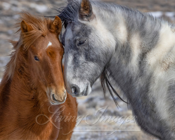 Wild Winter Cuddle Art | Living Images by Carol Walker, LLC