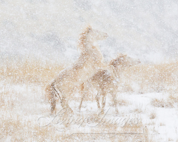 Snow Day For The Mustangs Art | Living Images by Carol Walker, LLC