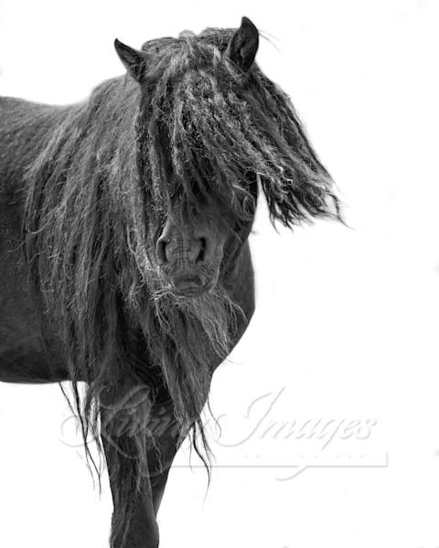 Sable Island Black Beauty Turns Art | Living Images by Carol Walker, LLC