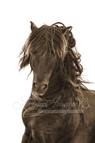 Dreamy Sable Island Stallion In Sepia Art | Living Images by Carol Walker, LLC