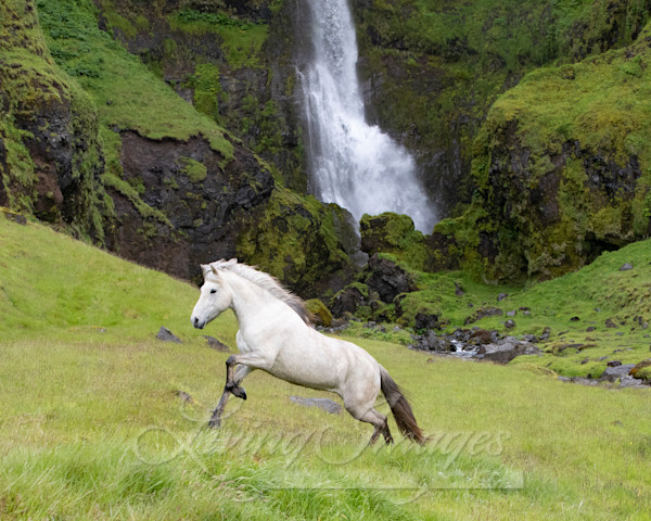 White Horse At The Waterfall Art | Living Images by Carol Walker, LLC