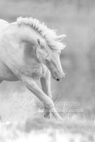 Cremosso Leaps Ii Art | Living Images by Carol Walker, LLC