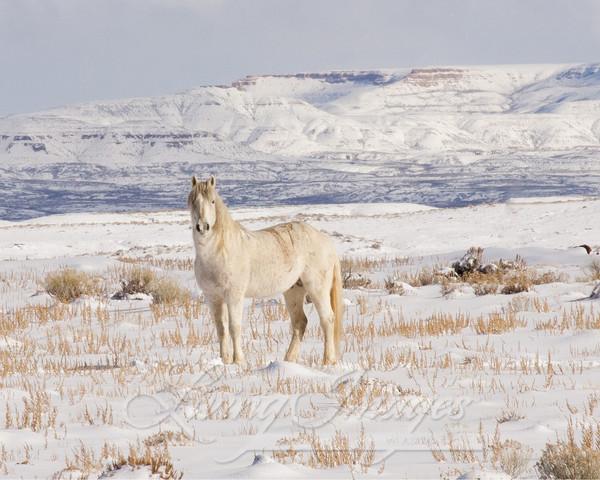 Wild Snow Stallion Art | Living Images by Carol Walker, LLC