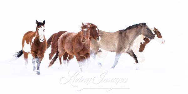 Snowy March Ii Art | Living Images by Carol Walker, LLC