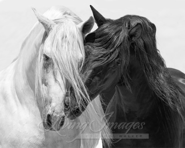Black And White Friends Iii Art | Living Images by Carol Walker, LLC