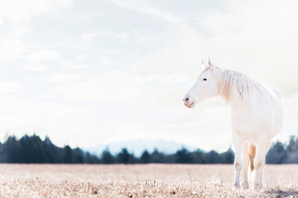 The Lonesome White Horse of Shawnee Creek