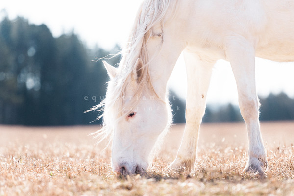Sunkissed Serenity Photography Art | Equestrian Art